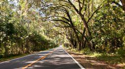 New 5G Technology Threatens Canopy Roads