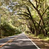 New 5G Technology Threatens Canopy Roads