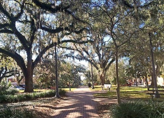 "Tallahassee Moves to Create a ""Tree Commission"""